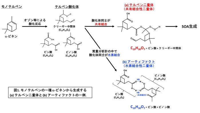 大気汚染物質を生成する「ホンモノ」と生成しない「ニセモノ」を見分ける ~二次有機エアロゾル生成に関わるテルペン二量体を正確に検出~